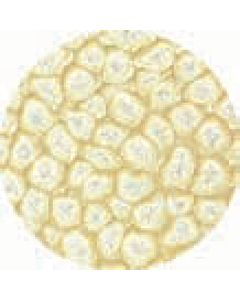 Prisme 45Ml Eggshell White