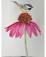 DEMO - Watercolor & Illustration W/ Marika Hahn Jan 6-27th HAHN JAN SERIES - 1-4 pm