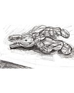 DEMO - Basics of Drawing - In Person Class With Chelsea - 11/06/21 1-3pm